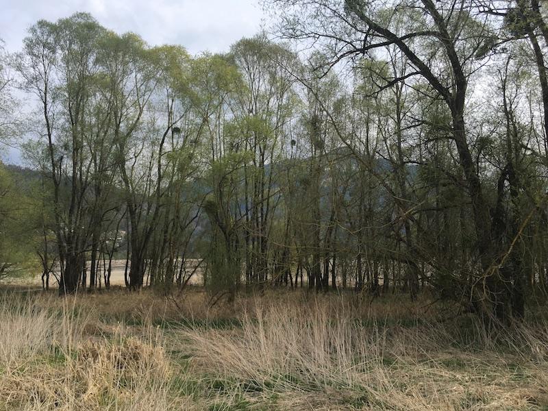 Lac de la Gruyère - Du côté de Morlon
