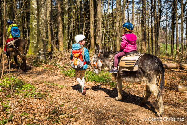 Balade âne, Villarsel-le-Gibloux
